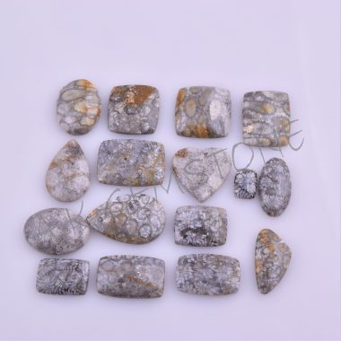 free size fossil coral cabochon