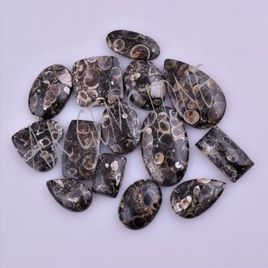 free size turtle jasper cabochon